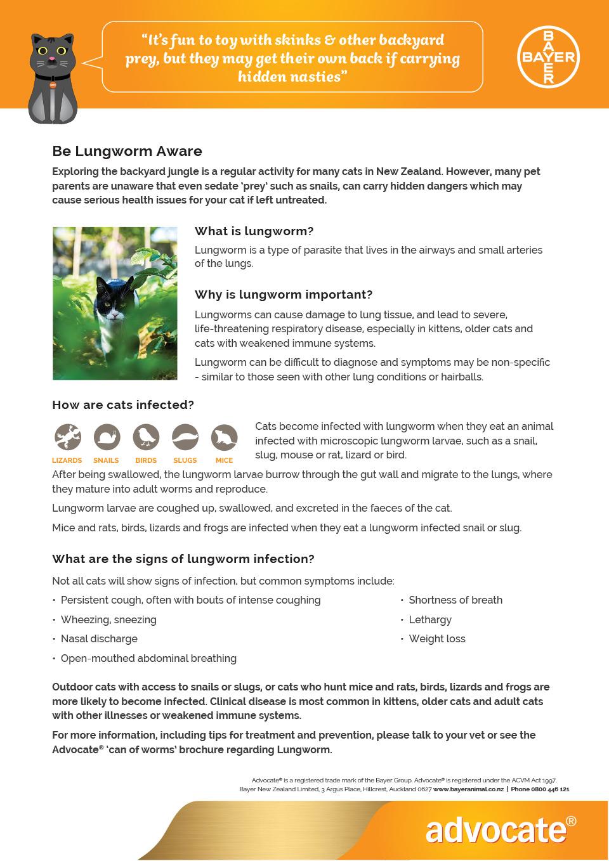 Cat Lung Worm Info