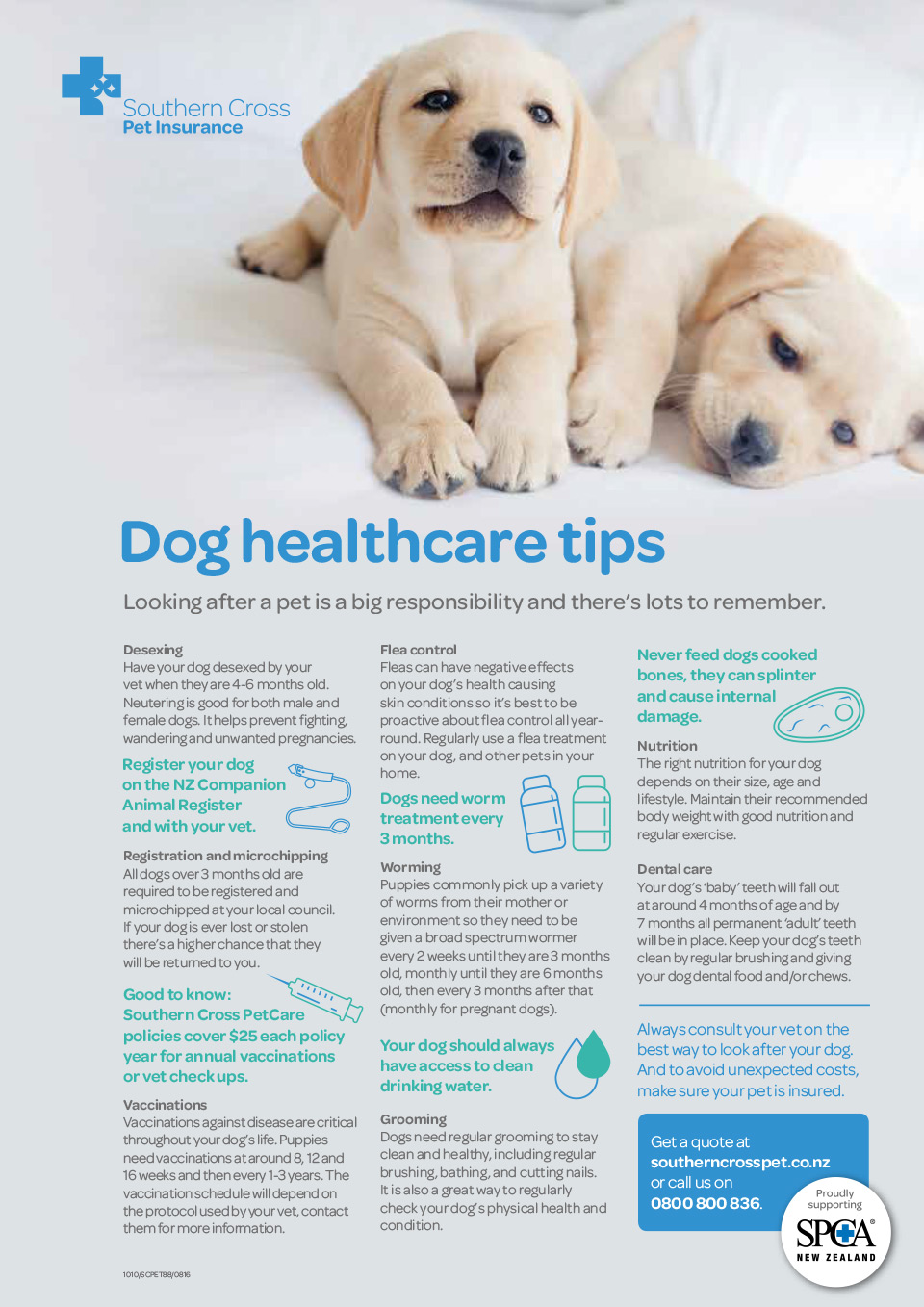Dog Healthcare Tips