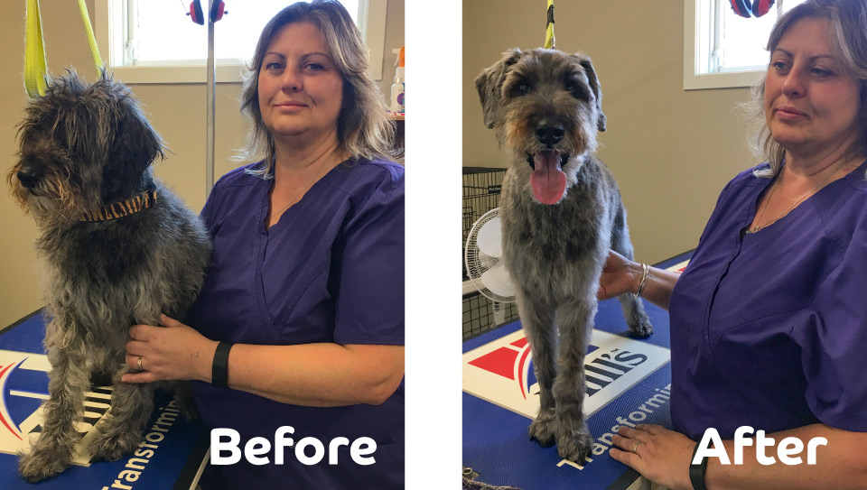 Lisa Spring-Finn, First Vets Whanganui Dog Grooming